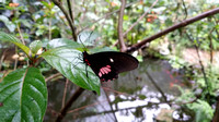 Butterfly House (420 of 779)