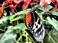 Butterfly House (419 of 779)