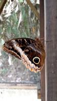 Butterfly House (410 of 779)